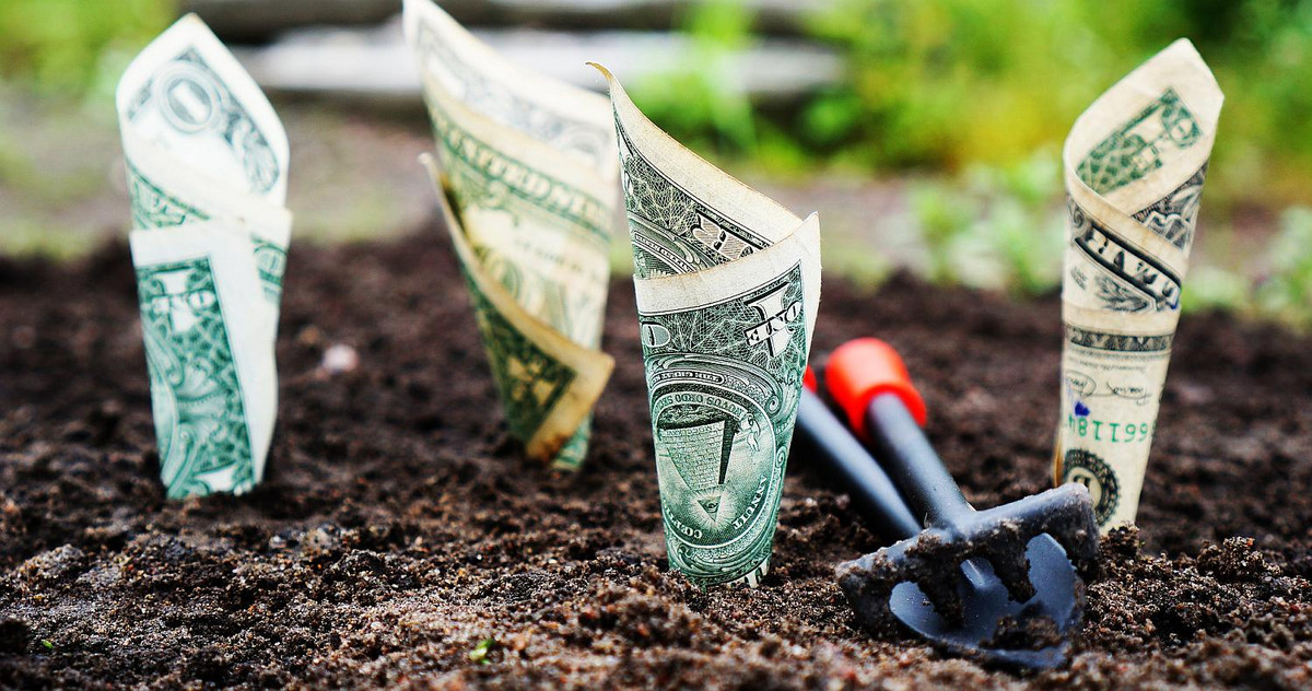 Picture of dollar bills planted into the ground