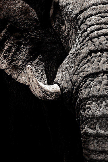 filler-news-business-tiere-elephant1-en.jpg