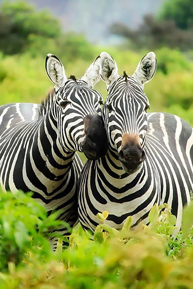 filler-news-business-tiere-zebra1-en.jpg