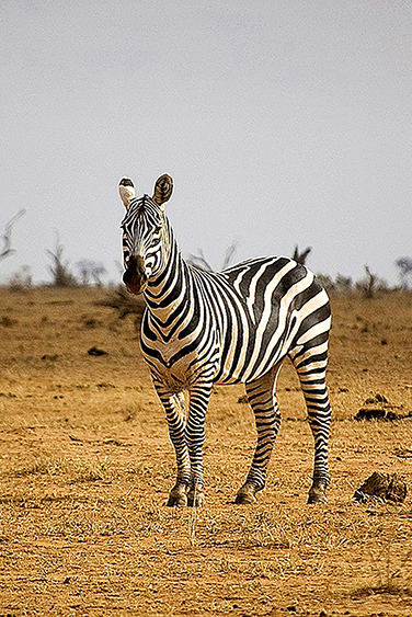 filler-news-business-tiere-zebra2-en.jpg